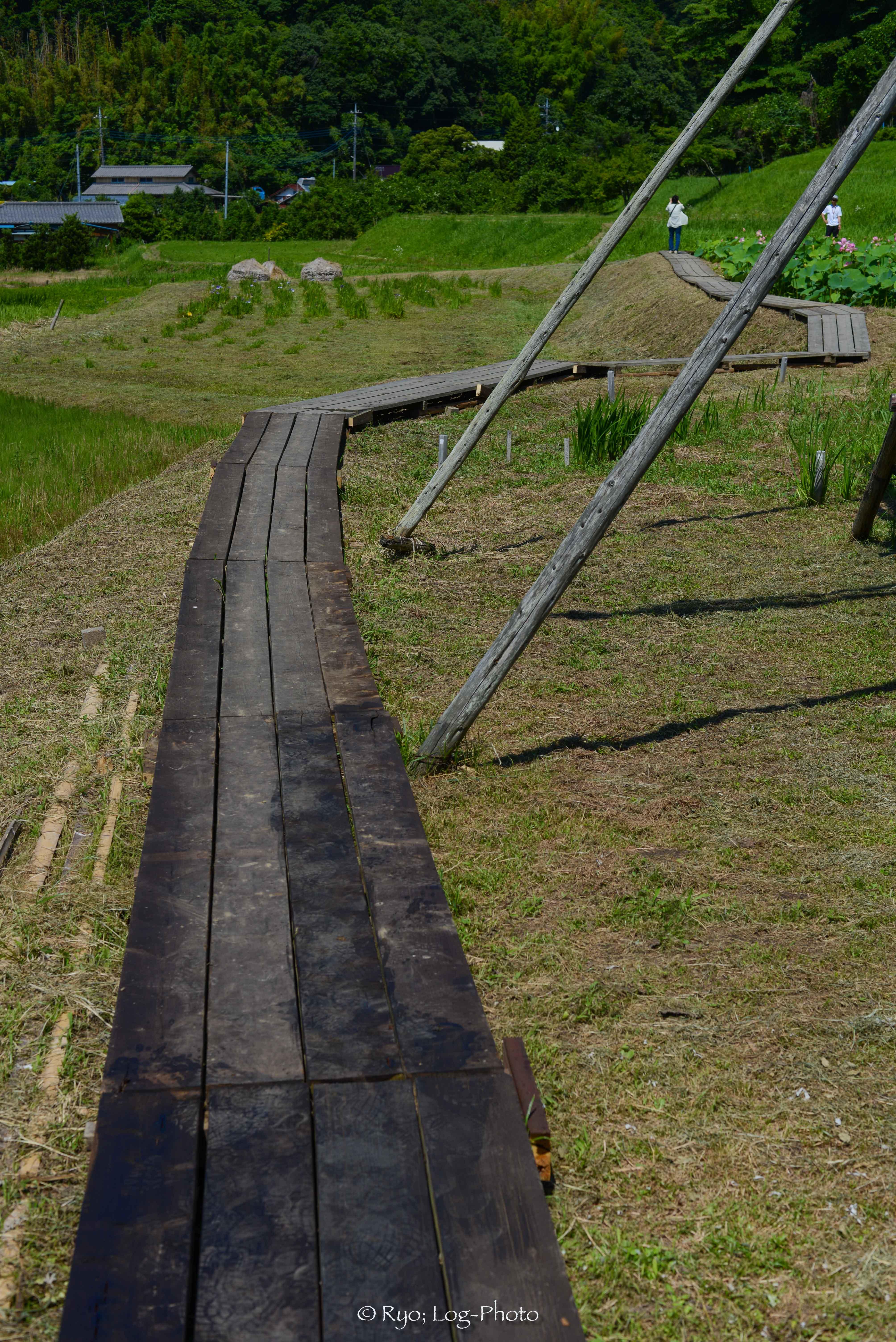 田んぼ周辺にも遊歩道があります