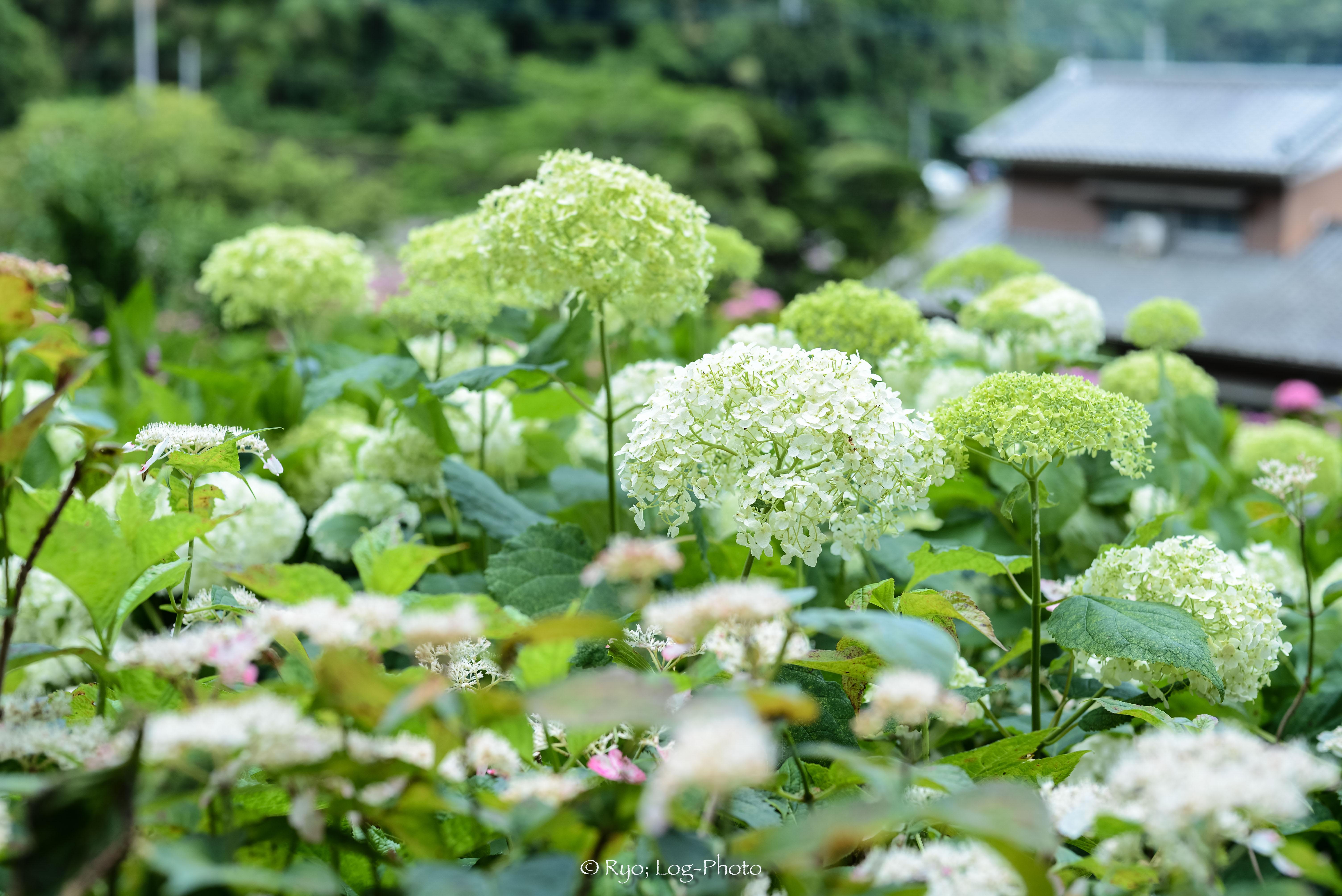 小ぶりな花。不思議な咲き方