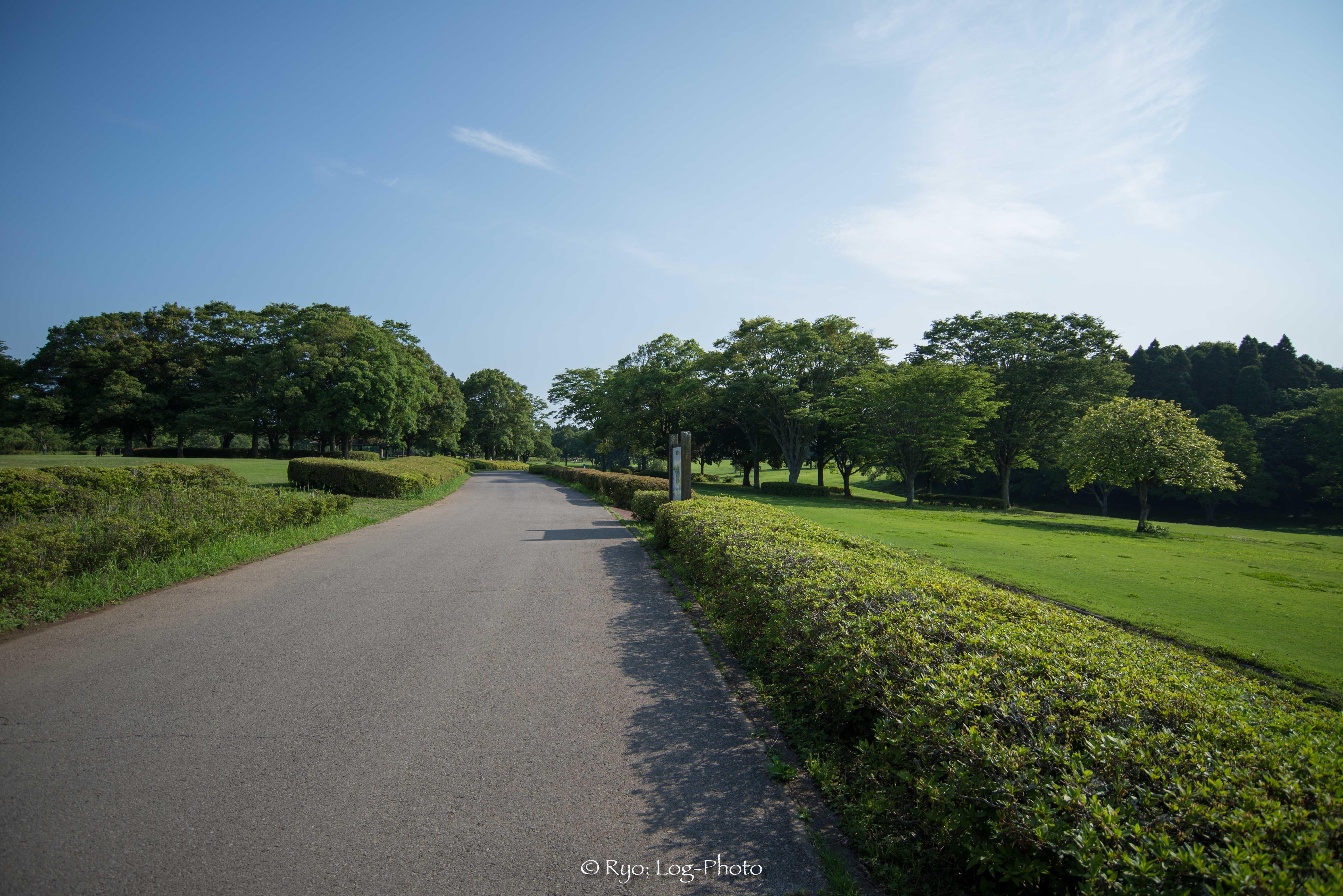 公園内の歩く道も綺麗に整備されている
