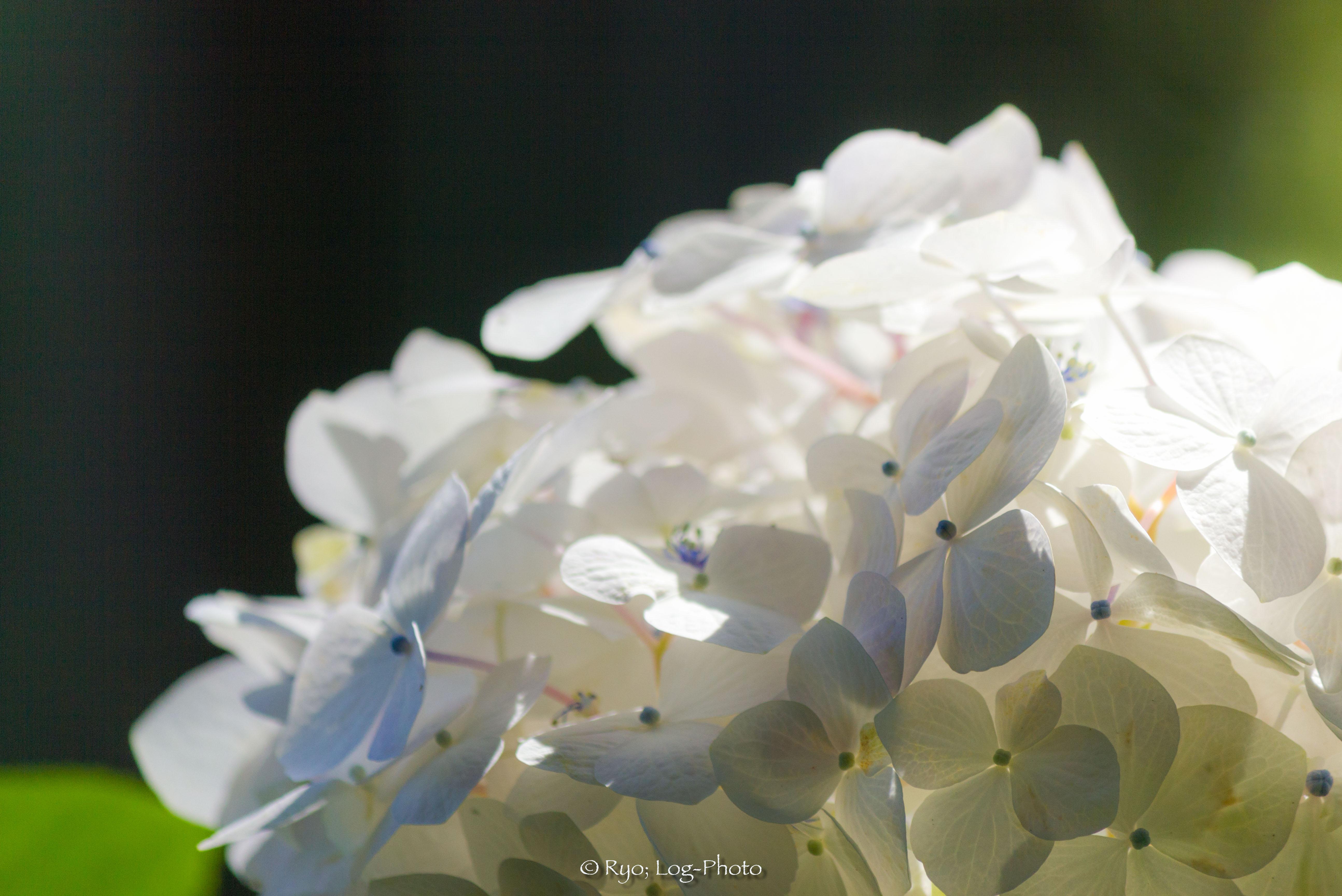 山の奥の方に真っ白な花