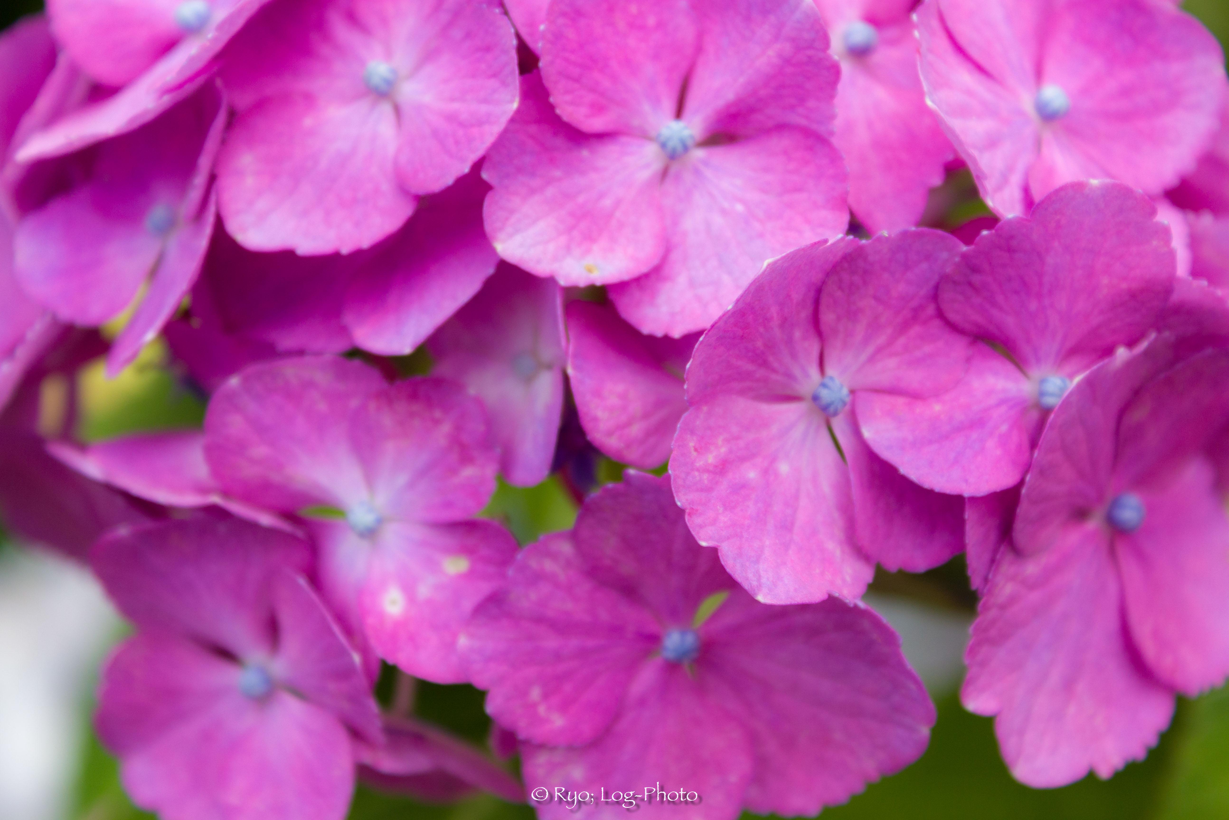花びらはギザギザだったり、まあるかったり