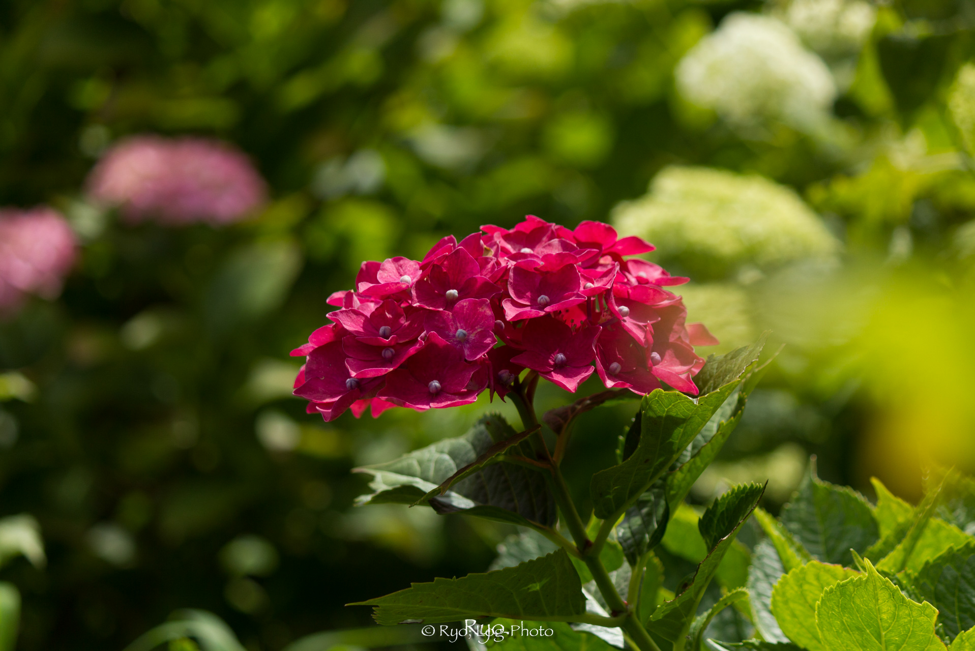 ひときわ目立つ、真っ赤な花
