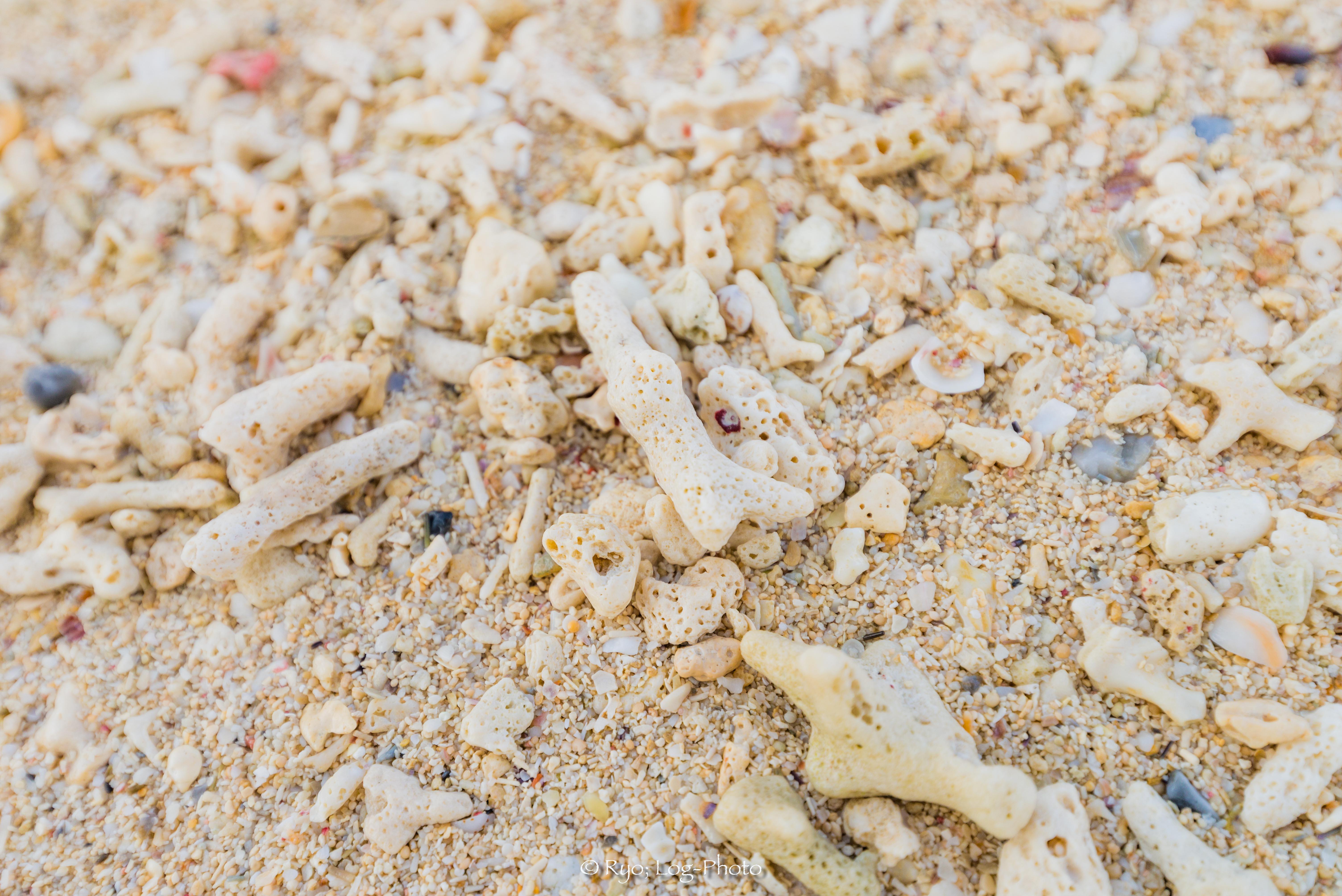 足もとは砂ではなく、サンゴ