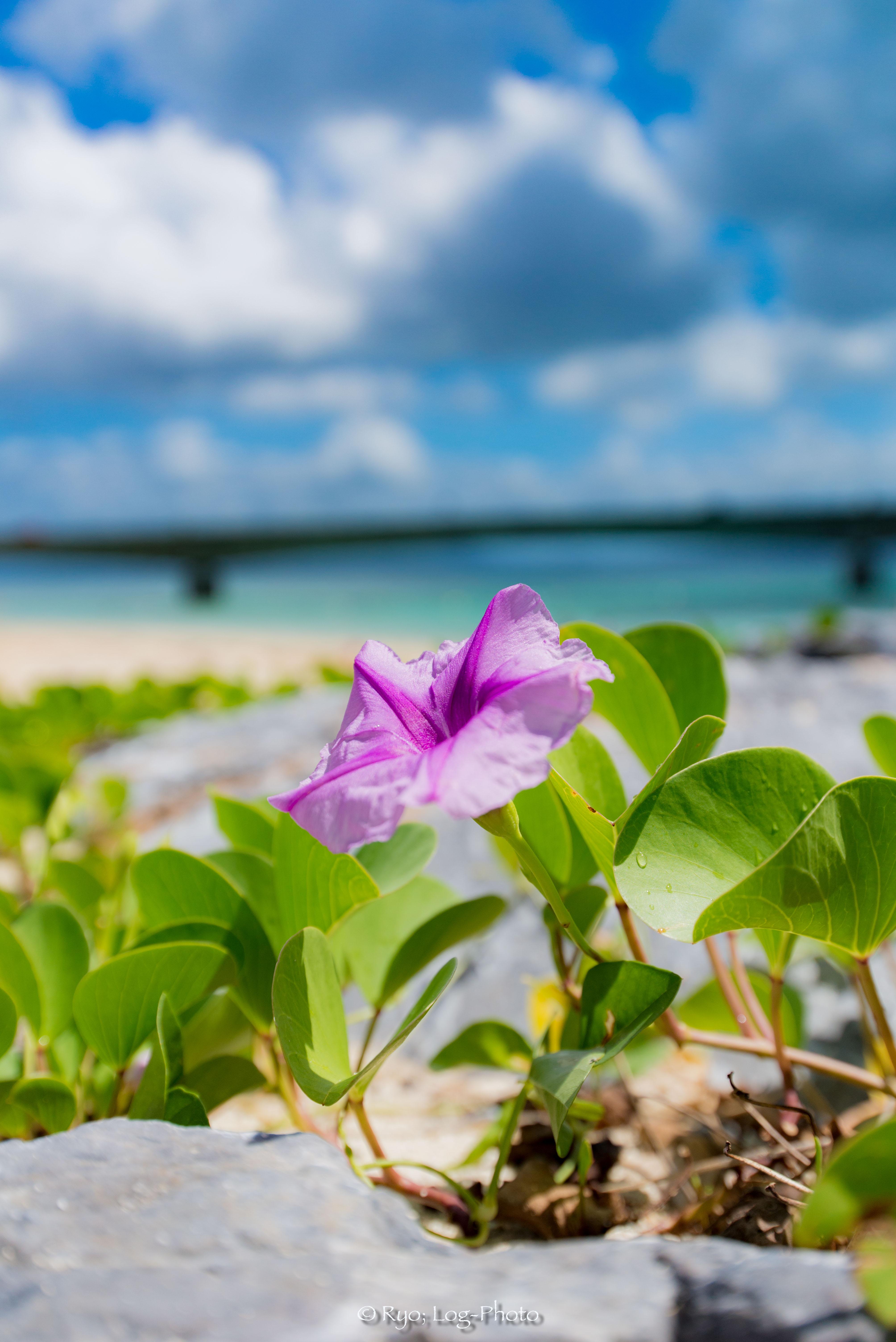 花と海と大橋