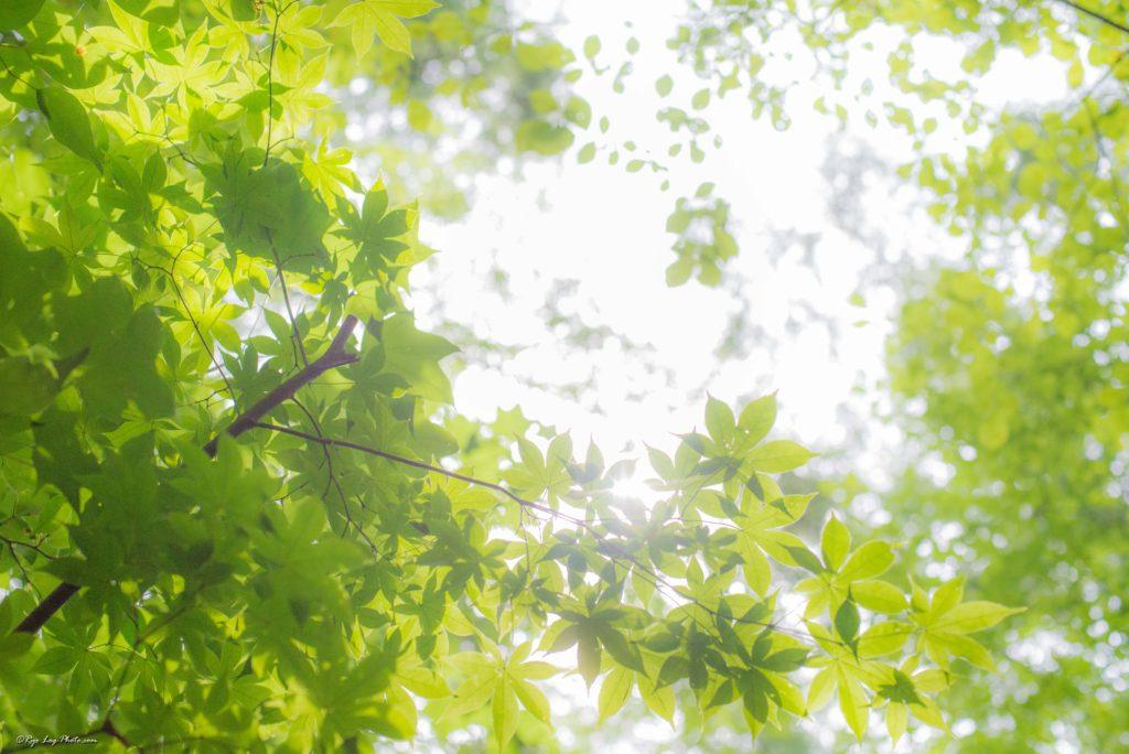 ハルニレテラス 木