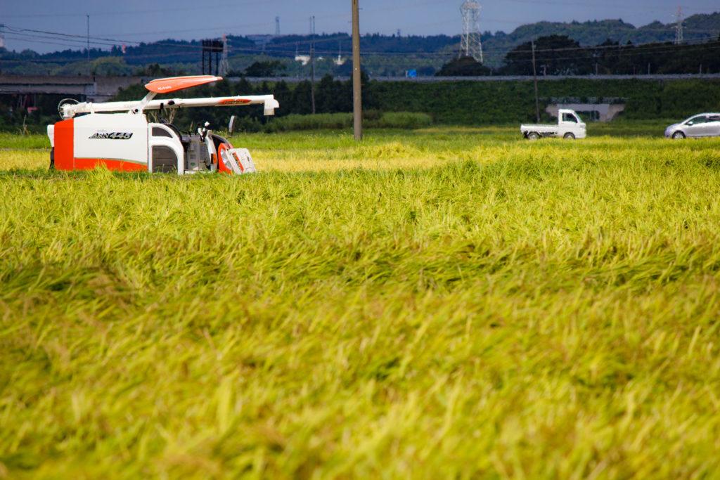 稲刈り コンバイン 黄金 稲