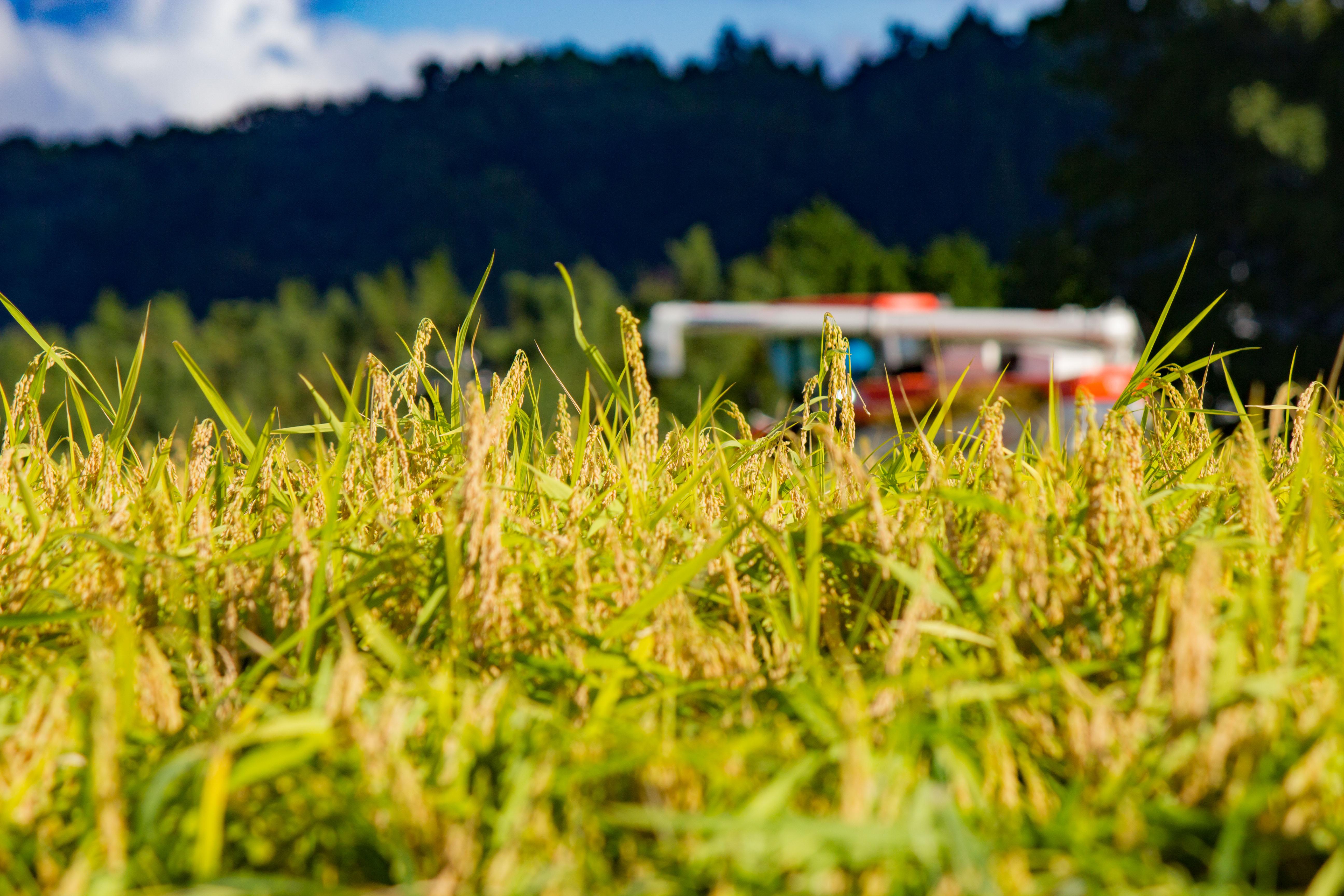 稲刈り コンバイン 千葉