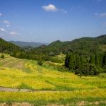 大山千枚田、稲刈り ライトアップ