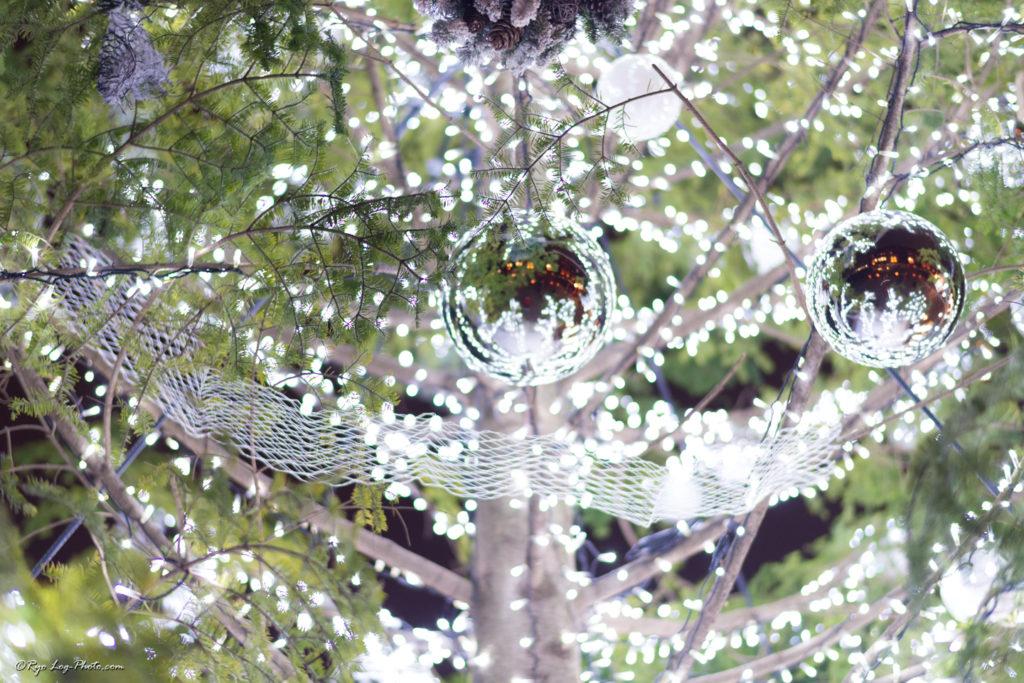 横浜赤レンガ イルミネーション 大きなツリー