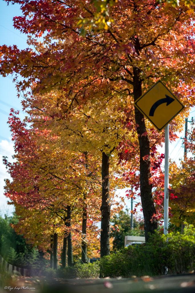 秋の木々はカラフルで、思わず キレイ と声が出てしまいます