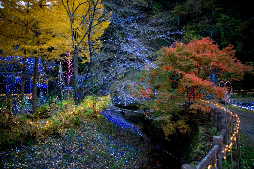 クオードの森 イルミネーション 紅葉