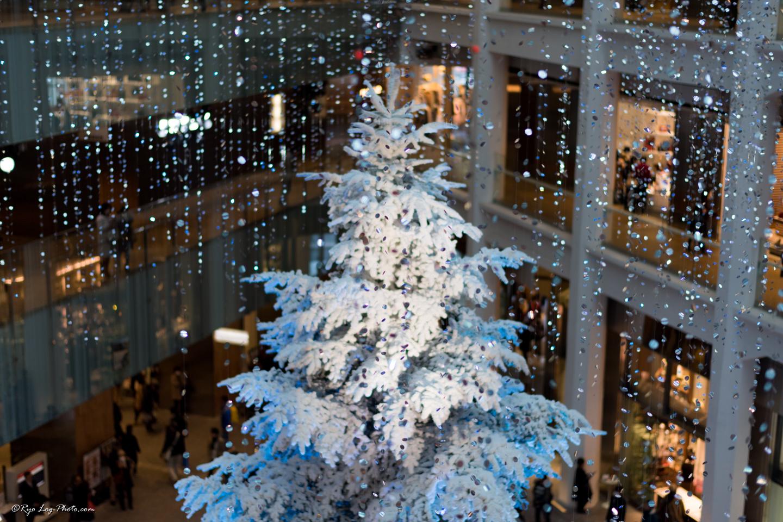 キッテ クリスマスツリー 本物