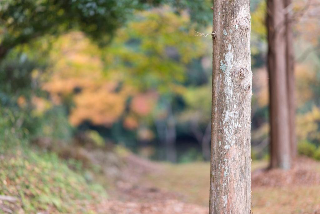 kouyou-2千葉 亀山湖 紅葉 105mm 1.4e