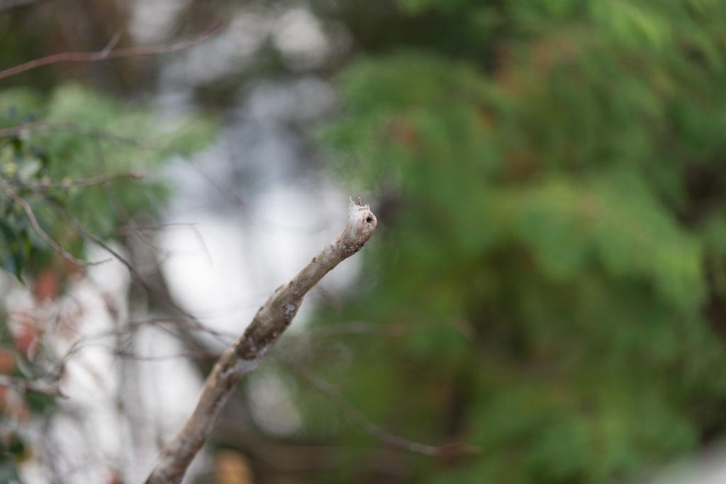 千葉 亀山湖 紅葉 105mm 1.4e