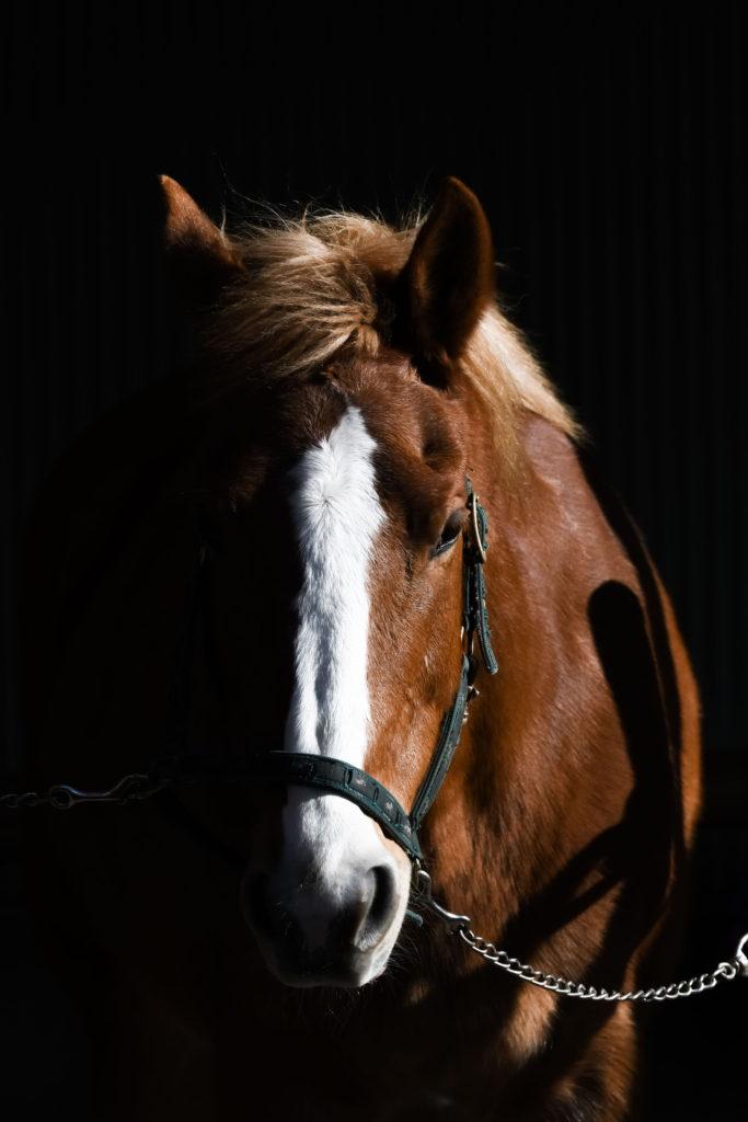 マザー牧場 乗馬 馬