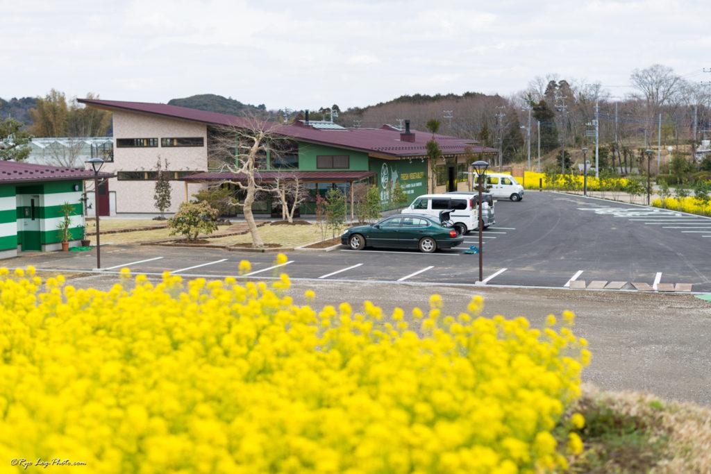 愛彩畑 菜の花