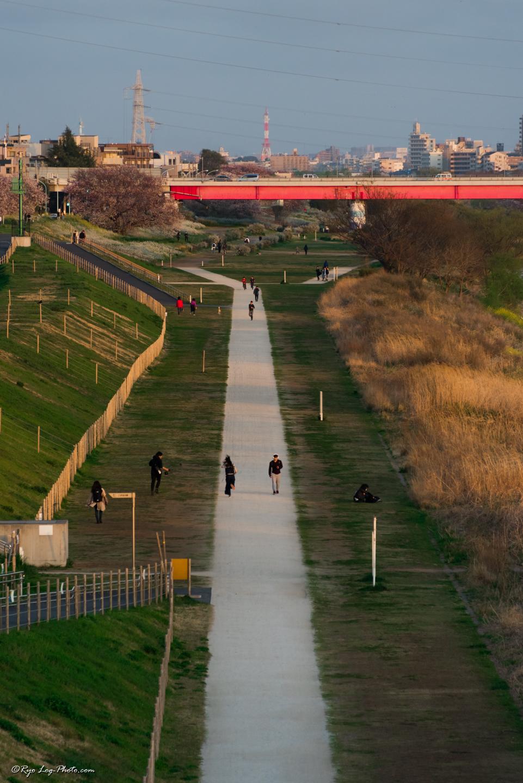 岸辺の散策路 二子玉川 河川敷