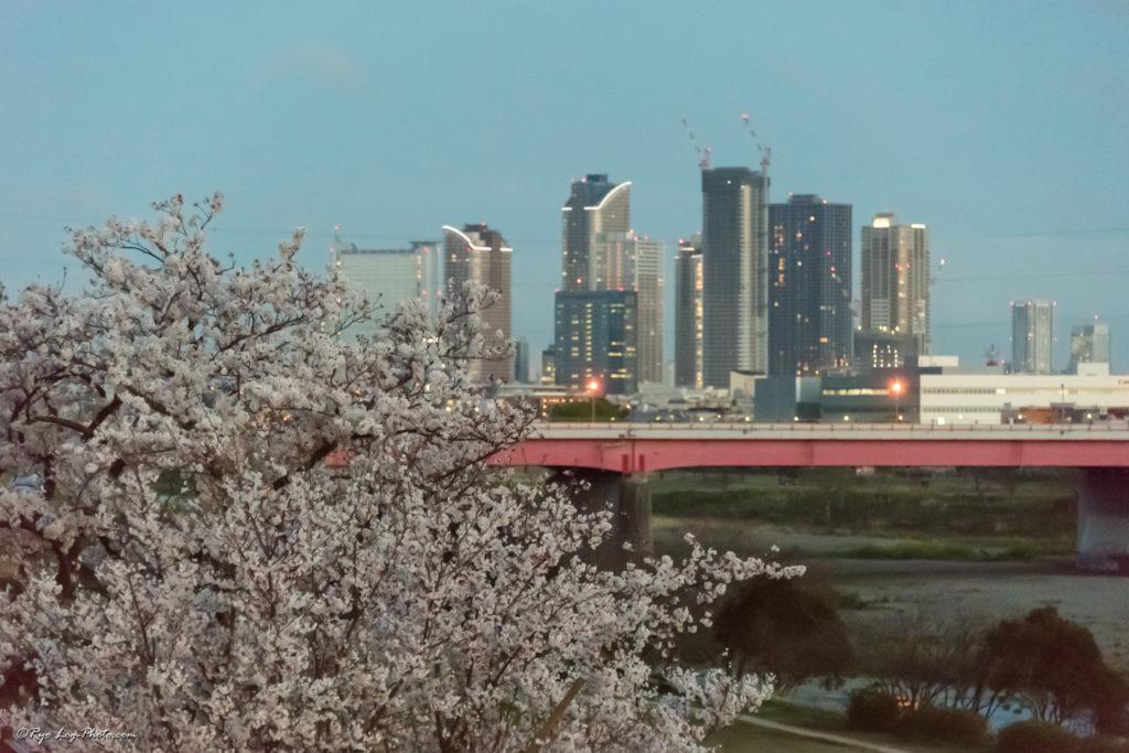 二子玉川 公園 桜