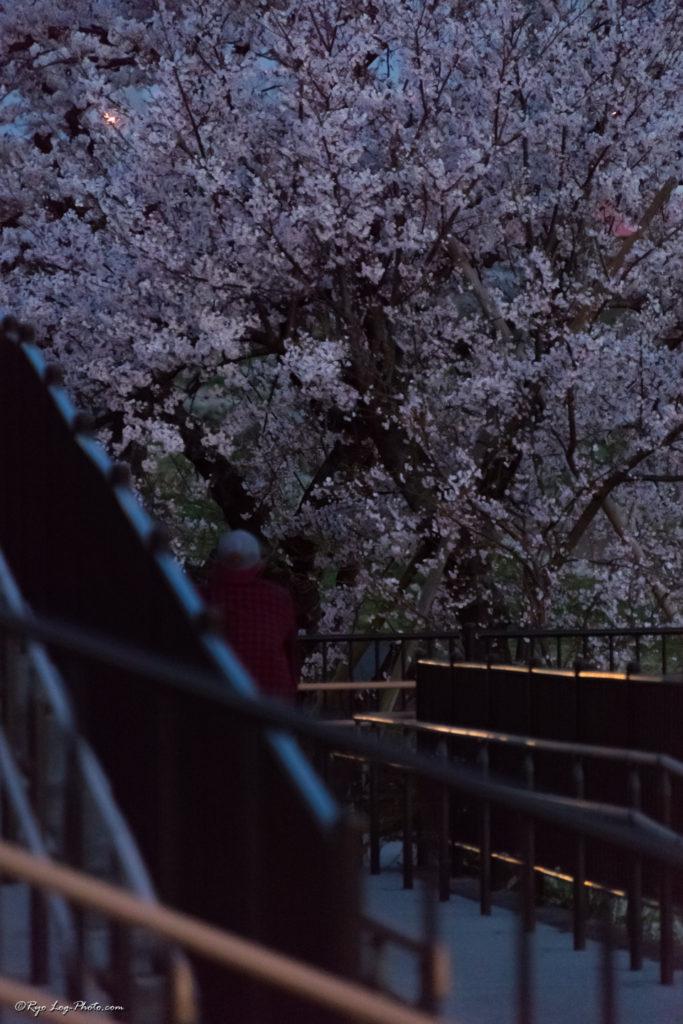 桜 二子玉川 夜景