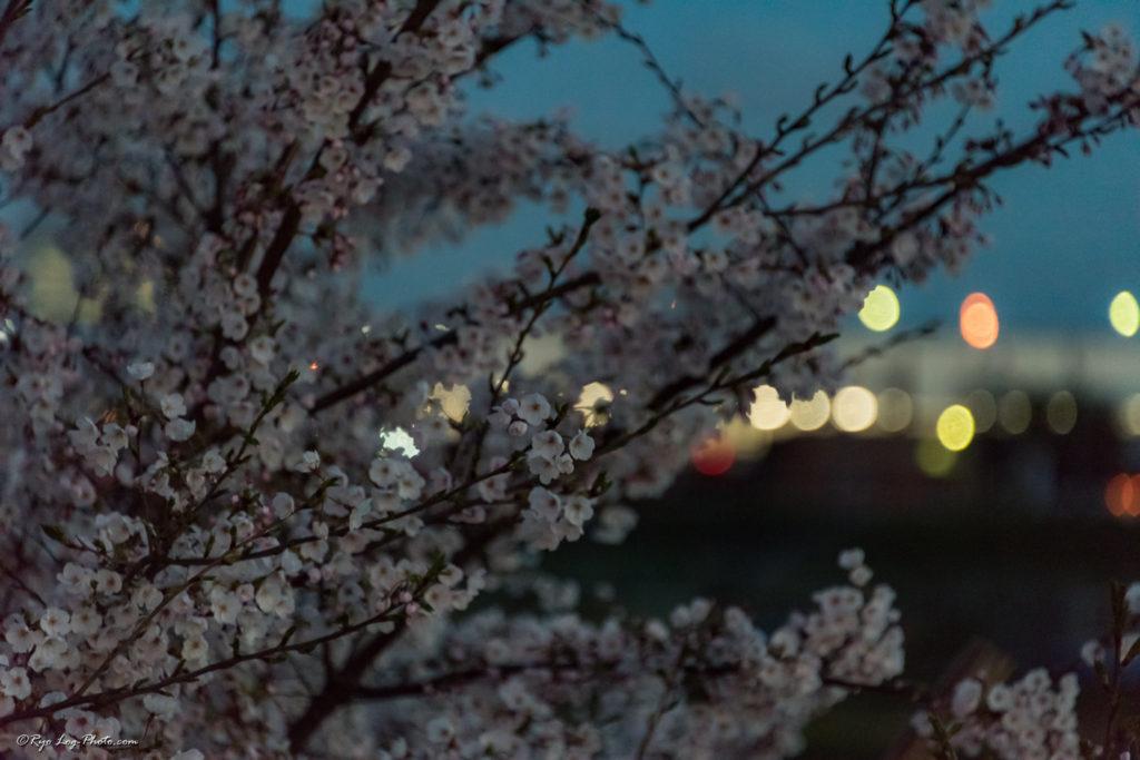 桜 玉ボケ 夜景 撮影