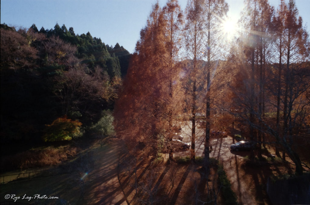 Lomography Color Negative 400 ISO 作例 判別