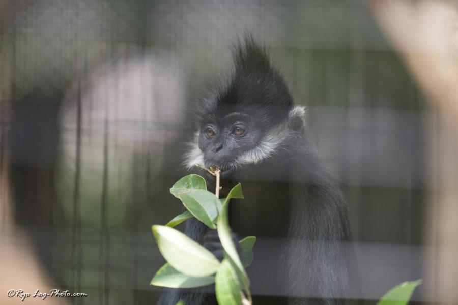 フランソワルトン ズーラシア 猿