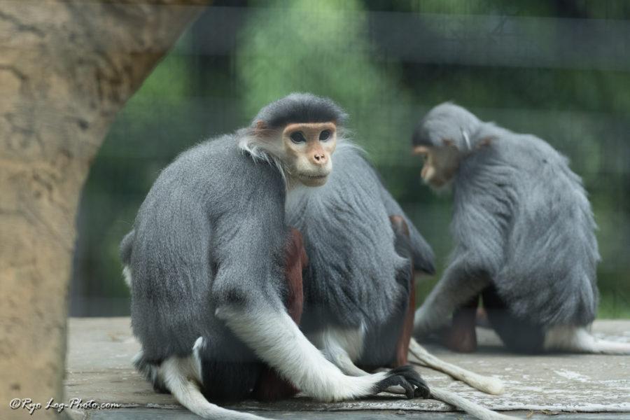 ズーラシア 猿