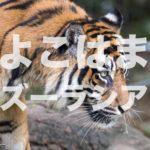 よこはま 動物園 ズーラシア
