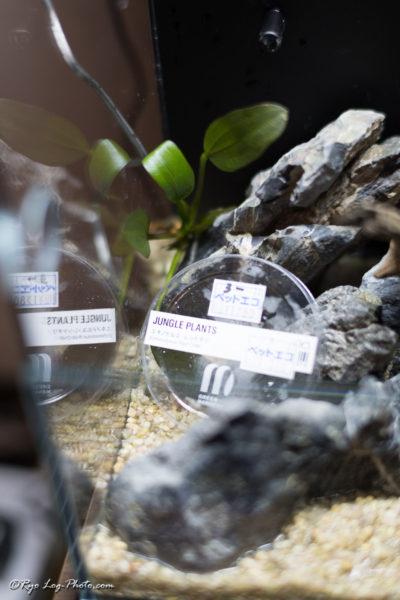 岩の配置や流木の配置が面白い