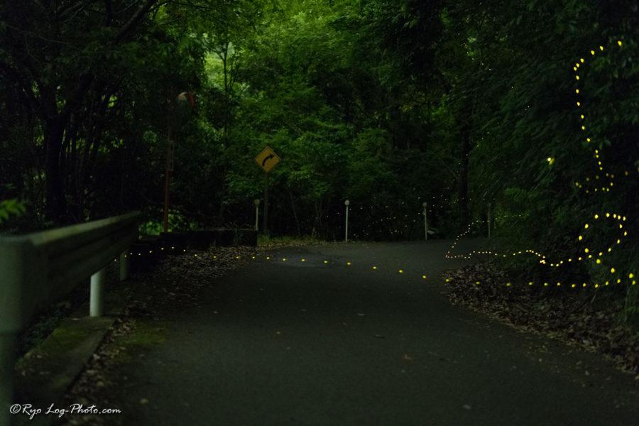 千葉県 ヒメボタル 時期 時間 秩父