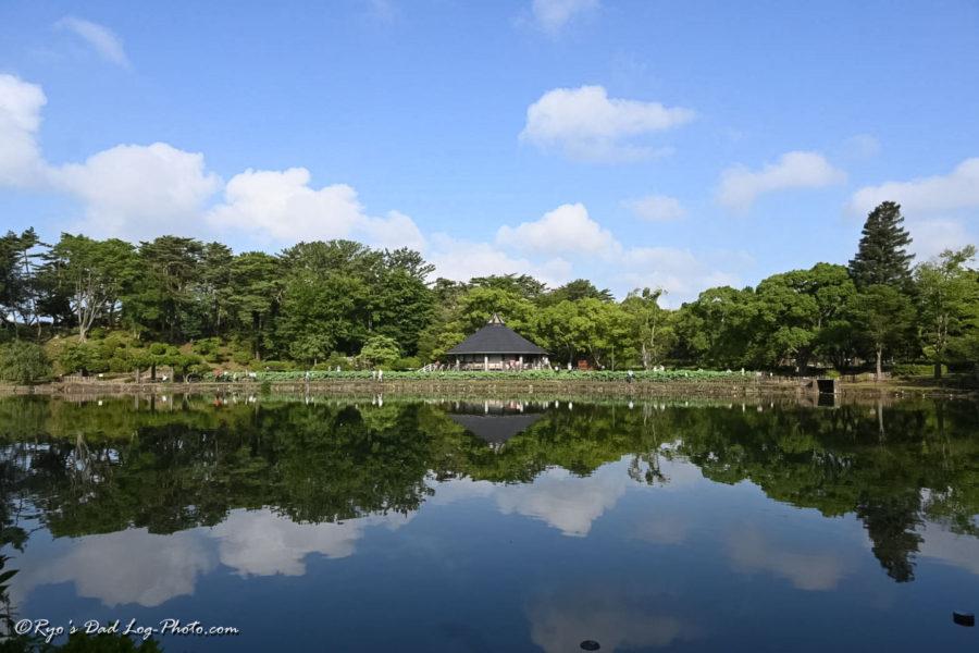 千葉公園 大賀ハス 池