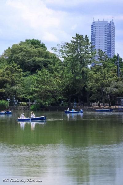 千葉公園 大賀ハス 蓮 Canon R5 135mm 1.8