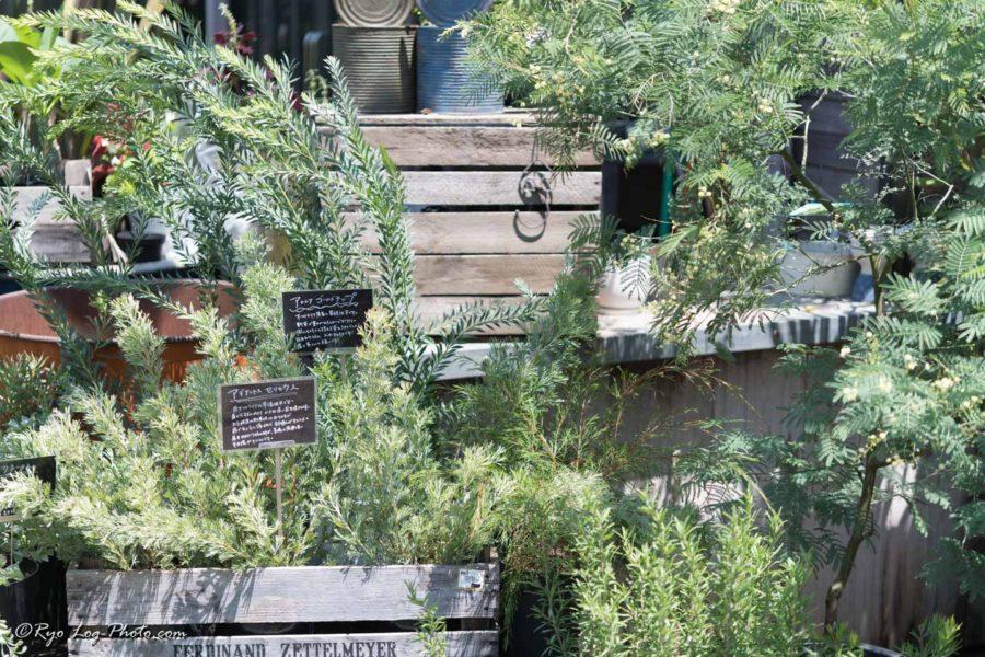 フレスポ稲毛 植物 the farm