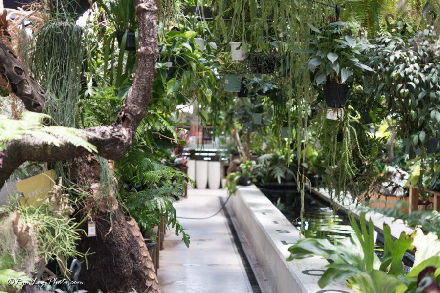 フレスポ稲毛 植物 the farm 観葉植物