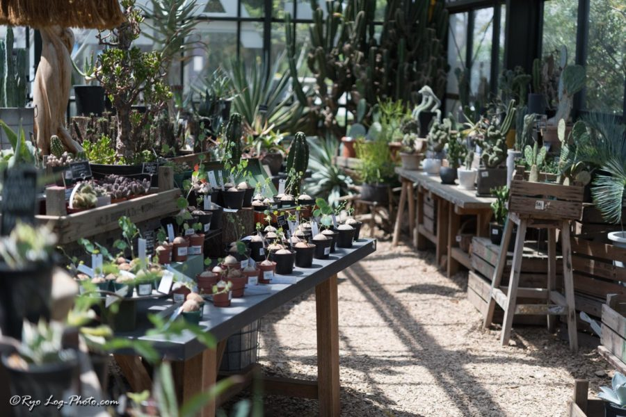 THE FARM 千葉 サボテン 温室