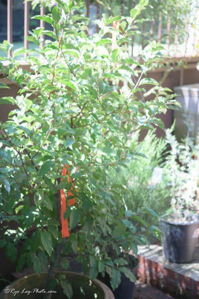 SOLSO FARM 川崎 屋外 植物