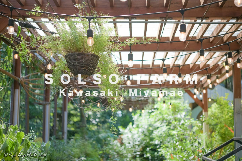 SOLSO FARM 植物 観葉植物